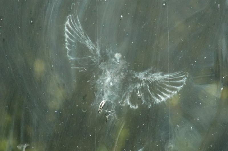 birdstrike